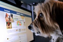 ميزة جديدة من فيس بوك للإبلاغ عن الأخبار الكاذبة